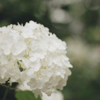 「ホワイト」という色☆