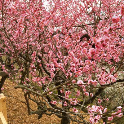 2/29 春到来♡梅祭り散策コン【つくば】